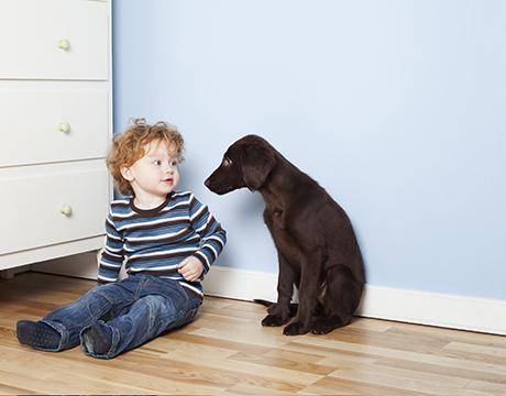pojk hund sitter på golv ögonkontakt